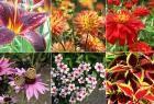Saiba como testar o pH da terra de um jardim e cuide das suas plantações.