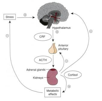 Balanced Bites Podcast: Episode #15 – Adrenal Fatigue, Part 1 | Balanced Bites | Holistic & Paleo Nutrition Education