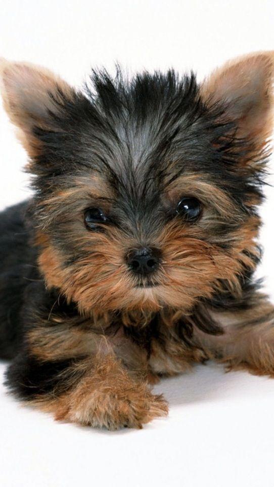 Omg!!! I want him! He is so stinking cute!