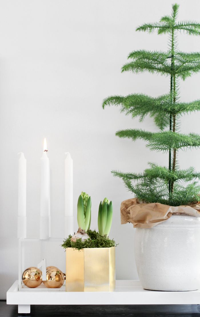 norfolk pines are all the rage and a fraction of the price | Nordic Christmas | By Lassen Kubus