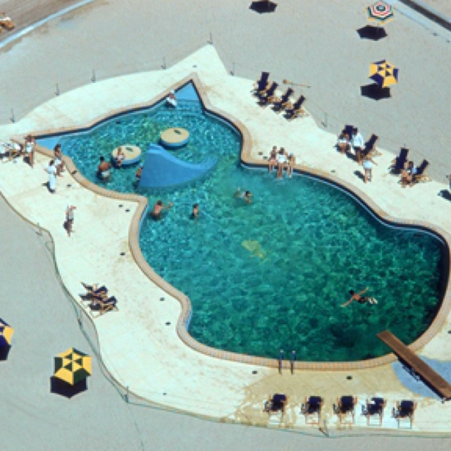 this cat shaped swimming pool brings new meaning to the phrase kitty pool