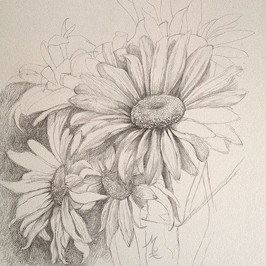 daisy drawing - Google Search