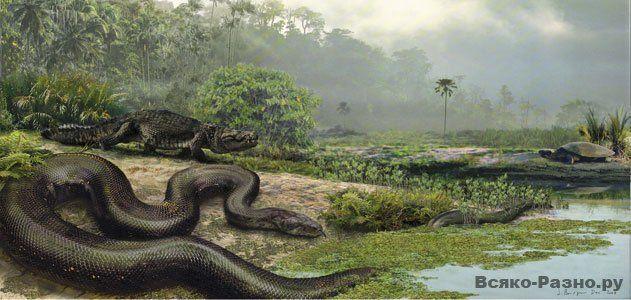 60-58 миллионов лет назад в болотистых джунглях Колумбии обитала титанобоа. Змея наподобие удава достигала в длину 15 - 25 метров и весила до тонны.