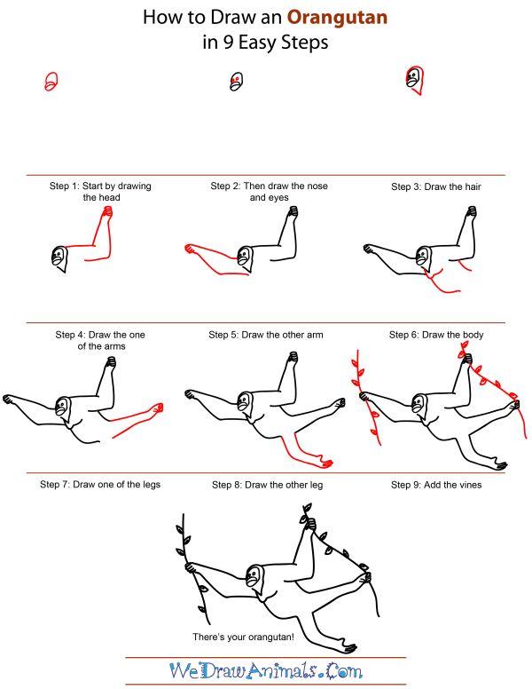 how to draw an orangutan step by step tutorial