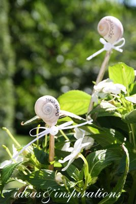snail plant markers
