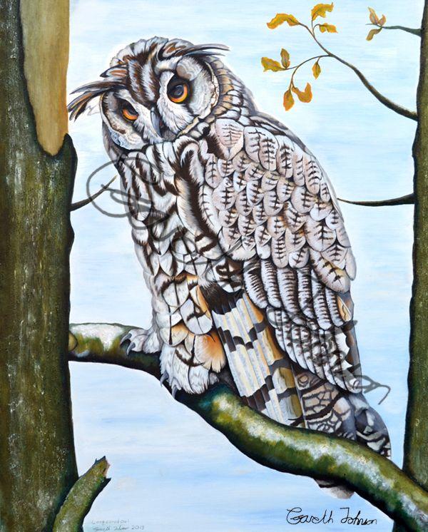 Long+Eared+owl+Oil+and+Acrylic+original+or+Print., £25.00