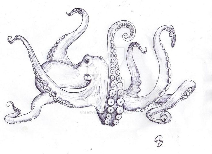Line Art Octopus : Best tattoo octopus images on pinterest