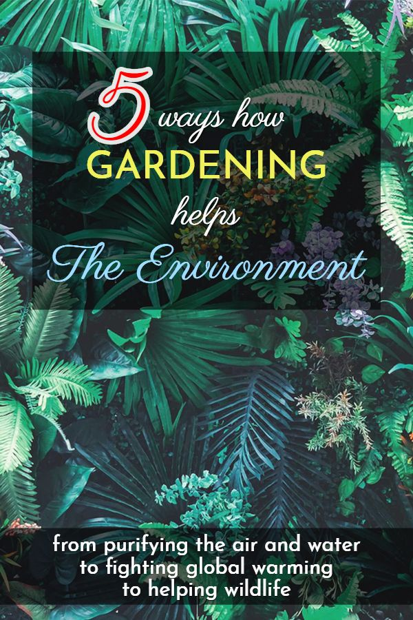 be84caa2d347e89bc566eba856d93569 - How Does Gardening Help The Environment