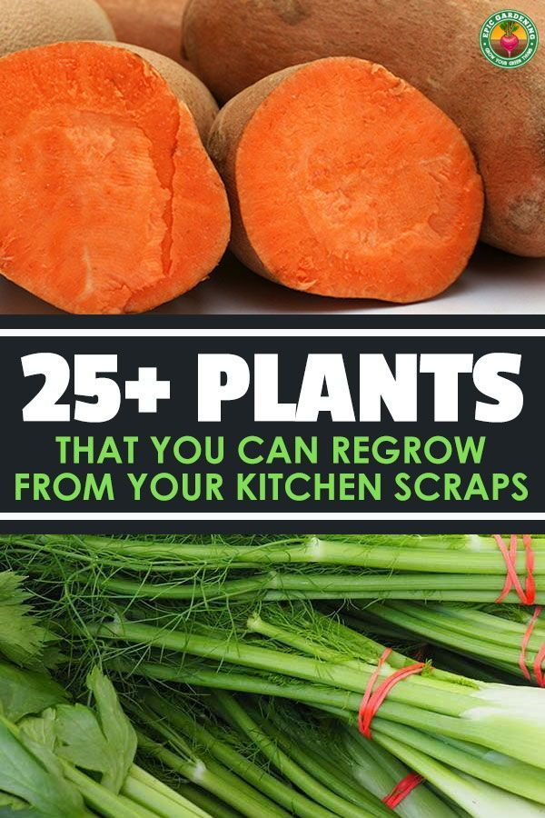 25 Plants That You Can Regrow From Your Kitchen Scraps With