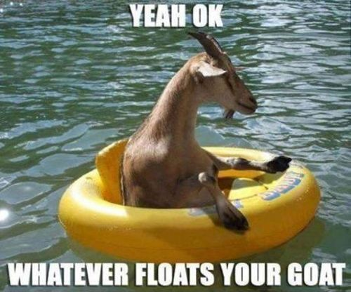 for once again making me LOL: Make Me Laughing, Funnies Animal, Funnies Pictures, So Funnies, Funnies Things, Too Funnies, Funnies Stuff, Funnies Goats, Can'T Stop Laughing
