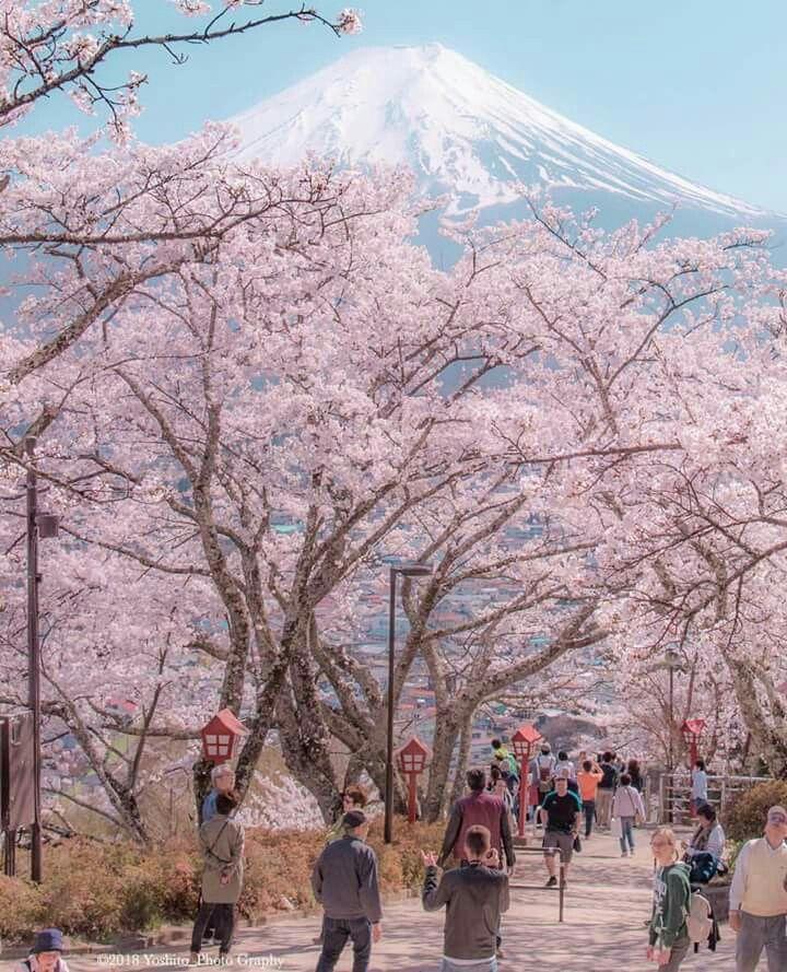 Mt Fuji in Yamanashi Prefecture, Japan    Yoshito_Tokunaga ©️