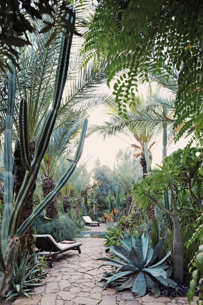 A dense garden of cactuses and exotics surrounds the lap pool at Dar Al Hossoun