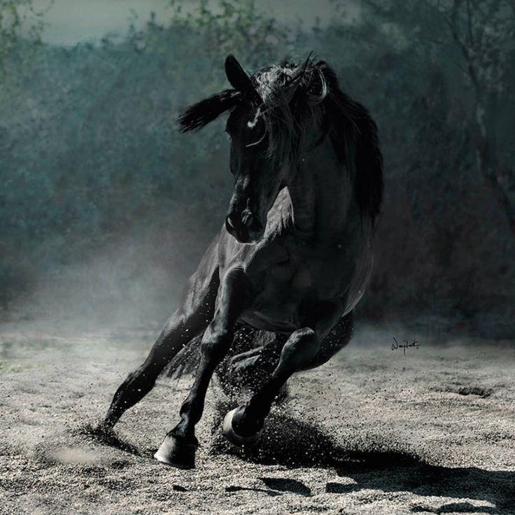 Рыжие, гнедые, серые, вороные… Лошади в объективе Войтека Квиатковски (Wojtek Kwiatkowski