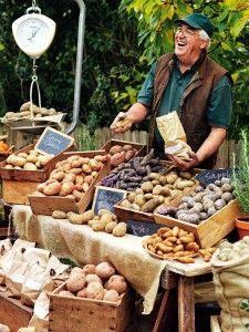 Ready For Market Part 4 - Highland Gourmet Potatoes @ Eveleigh Farmers' Market | Harvey Norman