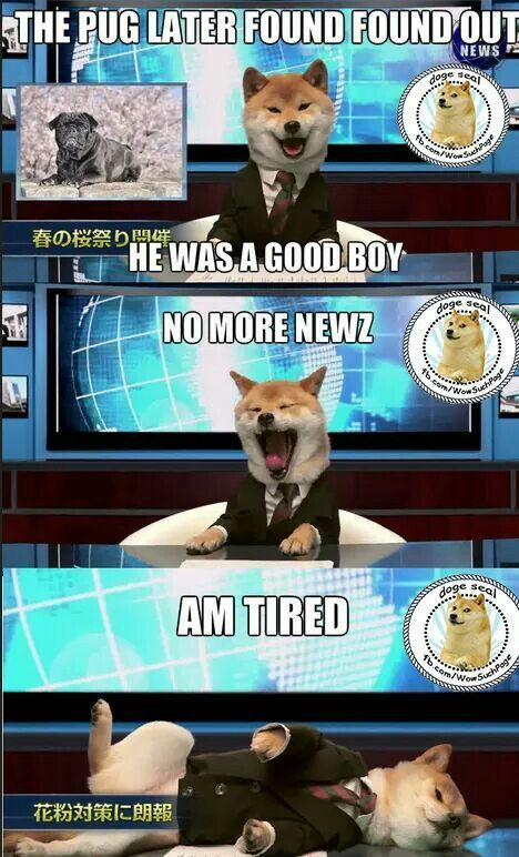 Oh my gosh! Finally found my absolute favorite newscaster! Love Shiba Inu's? Learn more about this breed at myfirstshiba.com