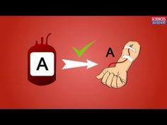 2 minutes pour comprendre les groupes sanguins vidéo sciences et avenir. A, B, AB, O rhésus, transfusion sanguine