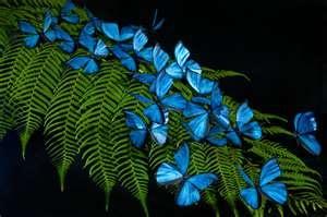 Blue Morpho Butterfly  so beautiful