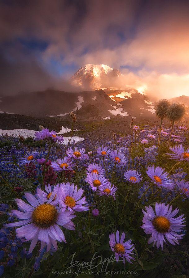 Photo Weather The Storm par Ryan Dyar on 500px - Mount Rainer, National Park (usa)