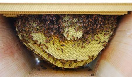 Queen excluder in top bar hives   Beekeeping Best ...