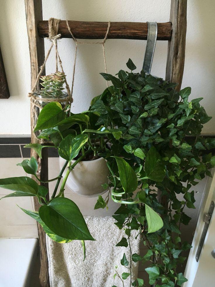 Piante Nel Bagno: Triostar come scegliere pianta da bagno poca ...
