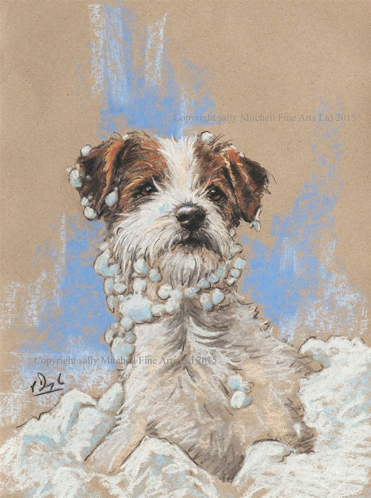 Wire Haired Jack Russell Terrier Christmas Cards Snow Beard