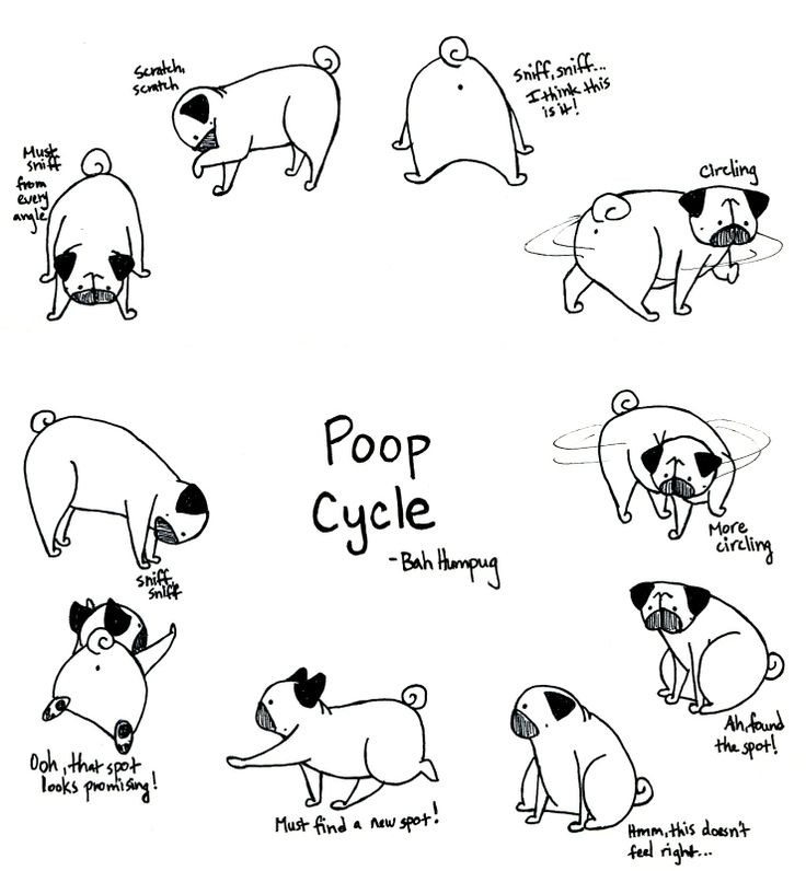 Bah Humpug: Pug Poop Cycle. Sunny goes through this cycle sometimes up to 5…