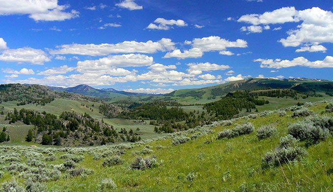 Yellowstone... Looking toward Specimen Ridge from the Garnet Hill Loop Trail. Photo by permission Flickr Upstate Dave