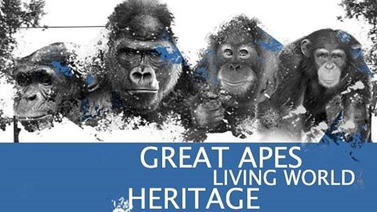 """Petition · UNESCO World Heritage Center: Menschenaffen als """"Lebendiges Welterbe"""" der UNESCO · Change.org"""
