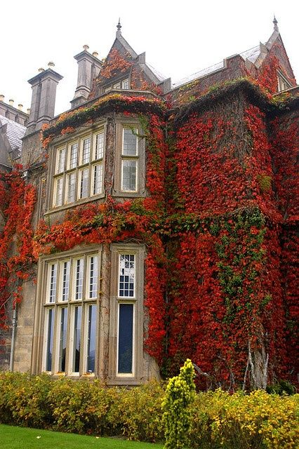 Ivy, Muckross House, Killarney, Ireland