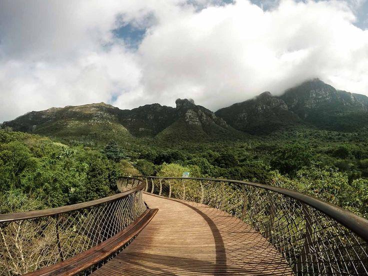 Giardino Botanico Nazionale Kirstenbosch Cape Town Sudafrica