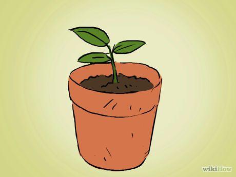 Apfelkerne einpflanzen