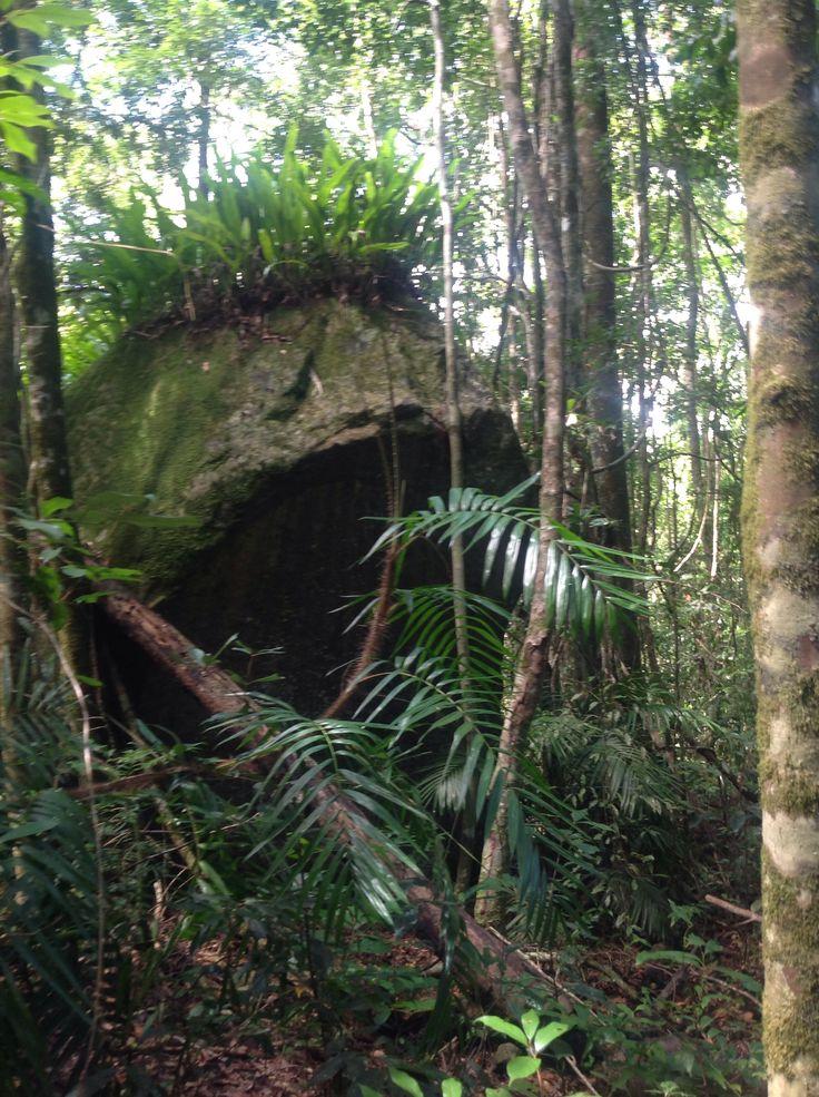 Finch Hatton Gorge, QLD
