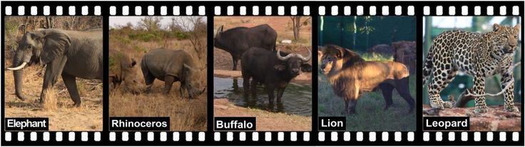 Part 3 of 3: The Big 5  What leopards would like to say!
