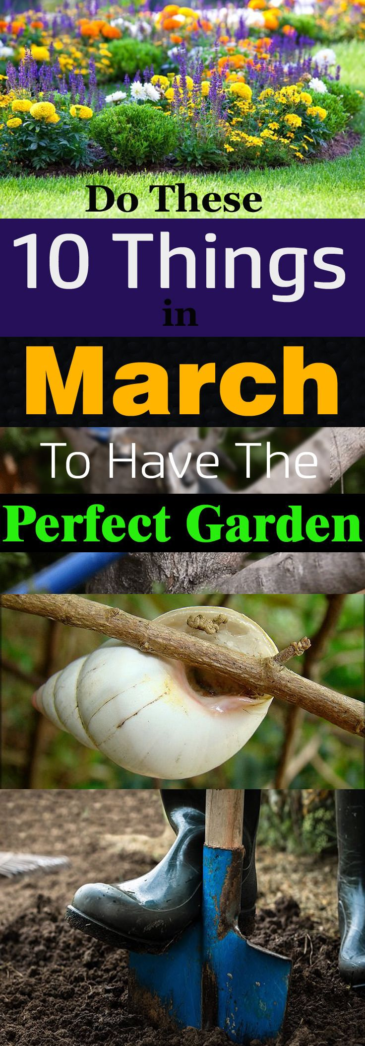 See the checklist of 10 important things you can do in March in the garden as the spring is about to come and gardening season is beginning!