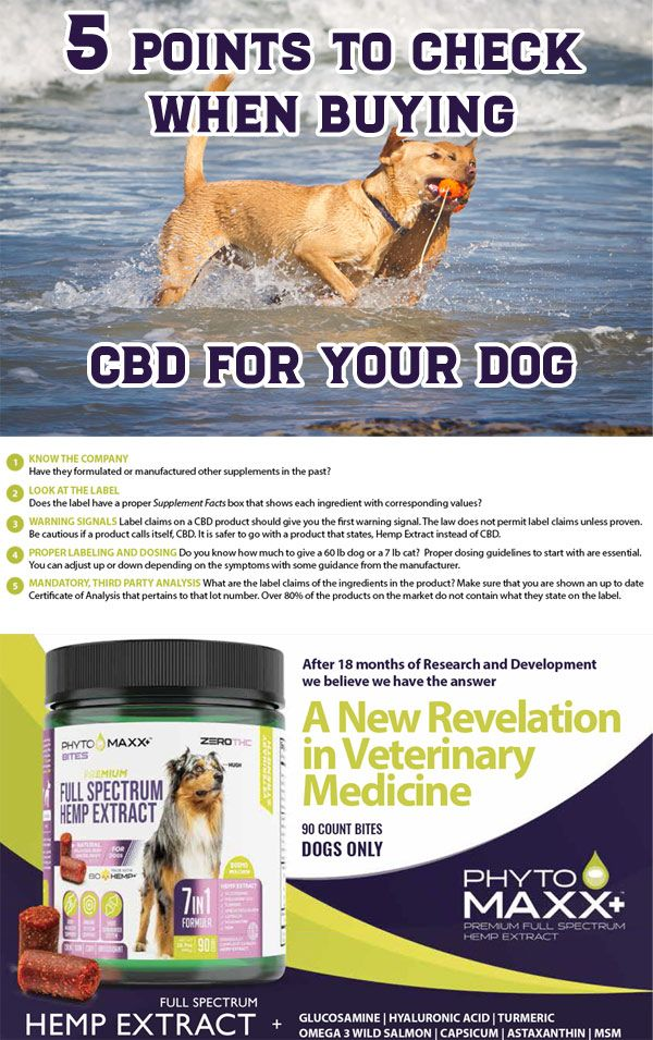 HOW DO I CHOOSE THE BEST CBD FOR PETS?