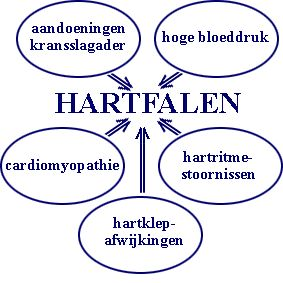 Hartfalen, cardioloog geeft uitleg