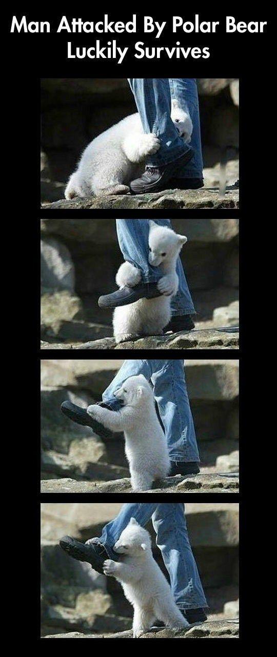 funny-baby-polar-bear-attack-legs