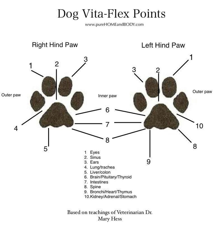 Paw pressure points