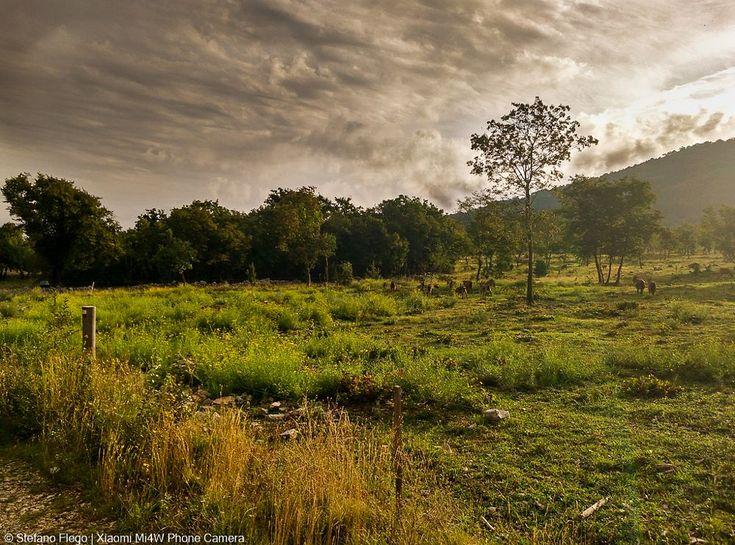 Landscape with my Smartphone Xiaomi Mi4 by Stefano Flego