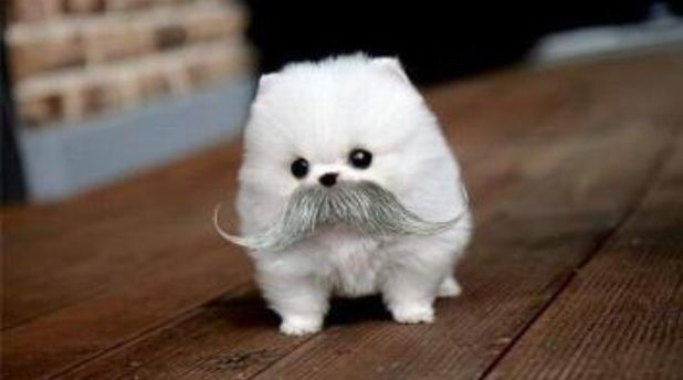 Fat Animals Cute Dog With A Mustache Fat Animals