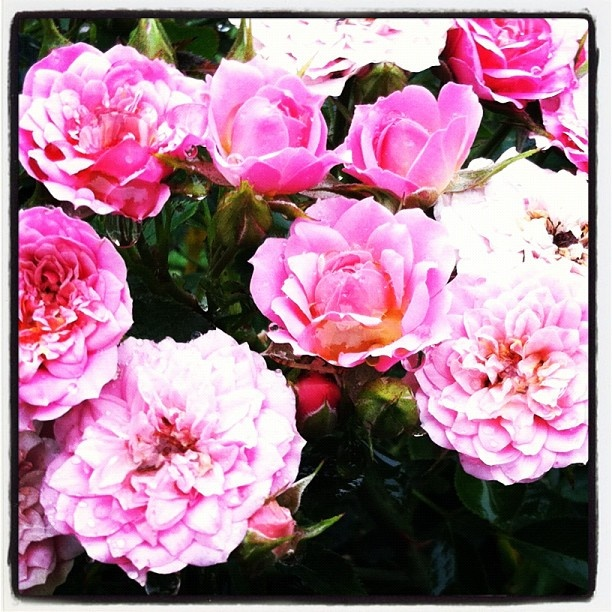 17 Best images about Michigan Flower Garden on Pinterest