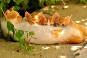 .: Funny Kitty, Dinners Time, Kitty Cat, Dogs Cat, Families Dinners, Kittens, Sweet Dreams, Cat Photos, Animal
