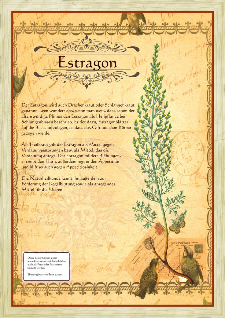 Estragon                                                       …