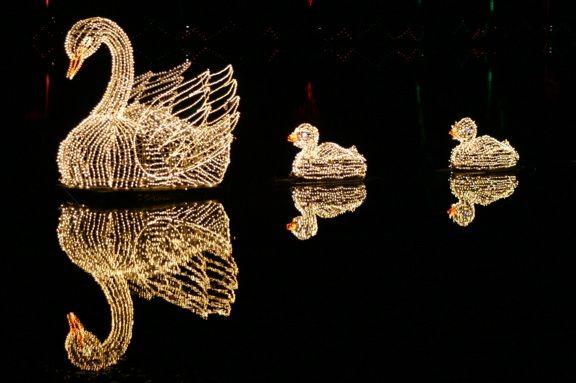 Callaway Gardens Fantasy In Lights2 - Swans Swimming Christmas Lights