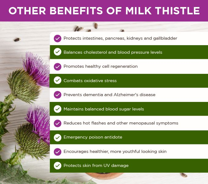 Milk thistle is one of the most widely researched plant medicines today.The Mayo Clinic website reports 18 different areas of health research involving milk thistle that have yielded good scientific evidence for its use or scientific evidence that is unclear but promising. 18!Milk thistle seeds are loaded with beneficial nutrients. For ...