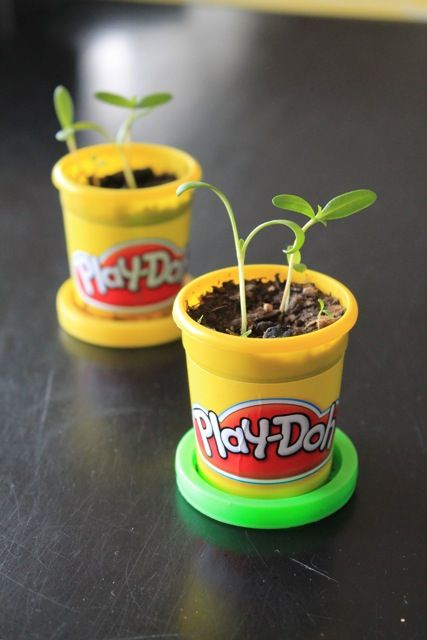 Reuse Play-doh containers for spring planting