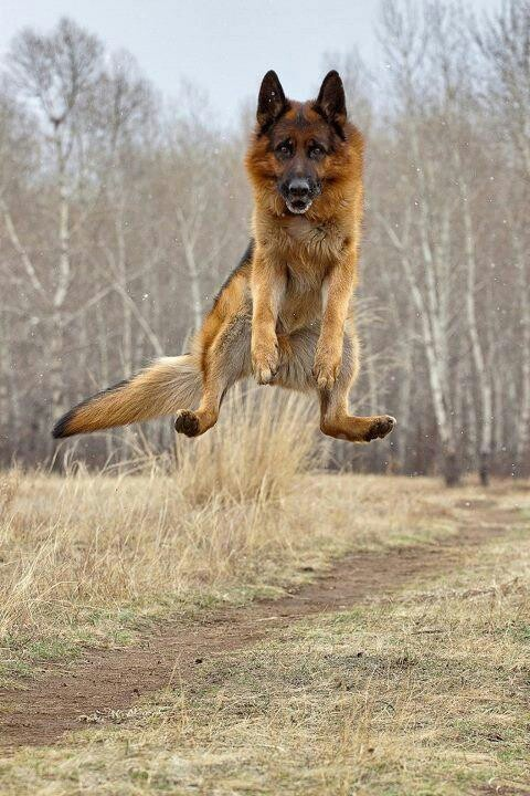 Jumping for Joy