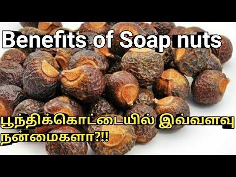 Benefits of Soap nuts/பூந்திக்கொட்டையில்