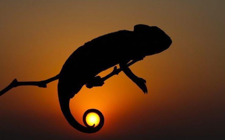 #illusioneottica  A volte è solo questione di un momento. Immortalare l'attimo perfetto, quello che inganna l'occhio ma che è stupendo da ammirare. La perfezione è impossibile da raggiungere, ma questi scatti si avvicinano molto. Fermare il volo di un cigno sul lago e vederlo riflesso nello specchio d'acqua, oppure ammirare una schiera di cervi che si guardano nell'acqua al tramonto.