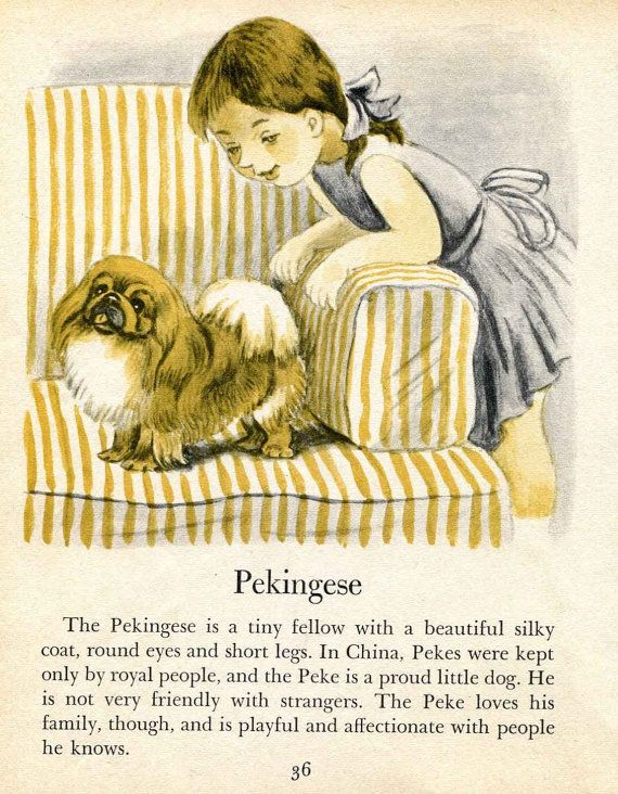 My sweet baby is a Pekingese....Love her!  Pekingese illustrations by Tibor Gergely